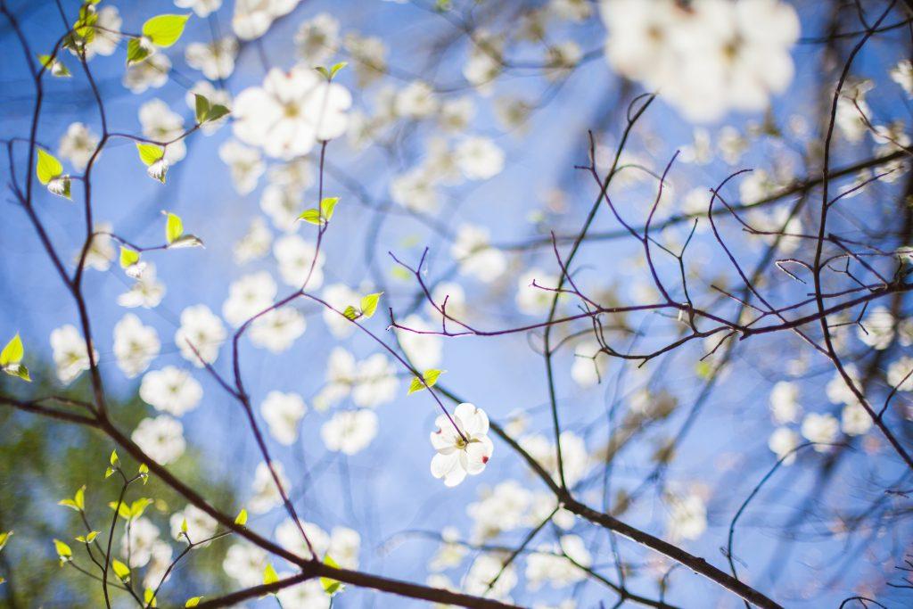 Frühling - Bunte Blüten als Inspiration für Mädchenschuhe